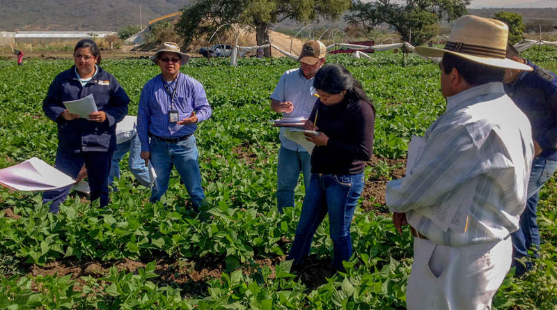 Publican NOM para proteger a los consumidores de alimentos de origen vegetal