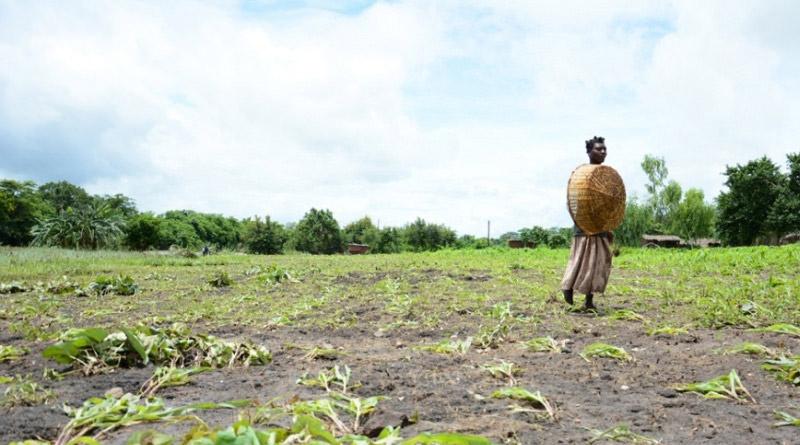 Destaca FAO necesidad de cambios para lograr seguridad alimentaria
