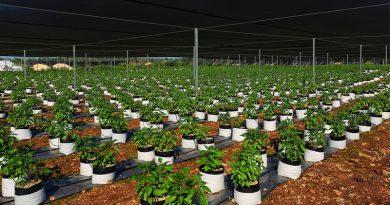 Novedosa criptomoneda mexicana que permite producir habanero