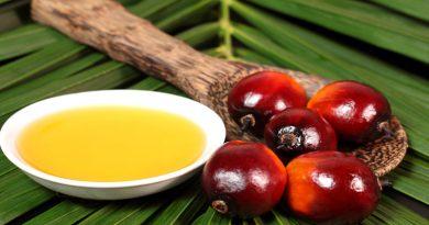 Greenpeace urge a grandes firmas revelar sus proveedores de aceite de palma