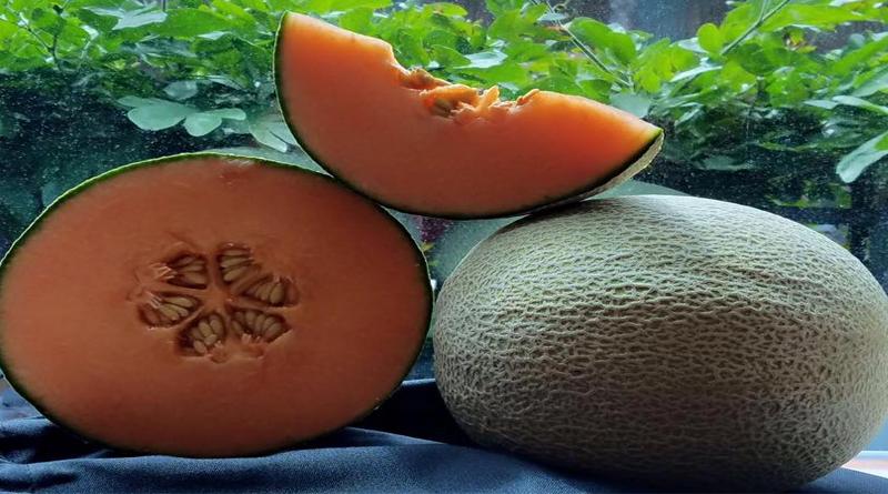 Especialización en semillas desde Israel
