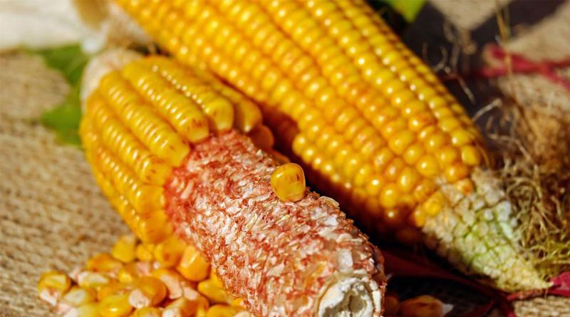 Desarrollan un maíz híbrido resistente a las sequías y bajas temperaturas
