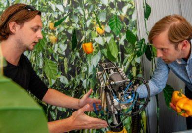 La comida del futuro se cultiva en un laboratorio